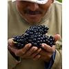 Bernardus Pinot Noir - Carmel Valley, Californië, VS