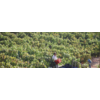 Aurora Winery Cabernet Franc 2015 - Batroun, Libanon