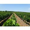 Venec Winery Traminec Single Block - Tikvesh, Noord-Macedonië