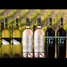Blijf Positief Pakket bestaande uit 6 flessen wijn