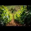 "Domaine Jean-Baptiste Ponsot Rully 1er Cru ""Montpalais"" 2018 - Bourgogne, Frankrijk"