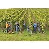 Weingut Georg Gustaf Huff Bacchus halbtrocken - Nierstein, Duitsland