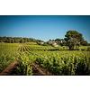 Montagnac M Sauvignon Blanc I.G.P. - Languedoc, Frankrijk