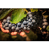 2-fles wijnkist Paladin Pinot Grigio & Syrah - Veneto, Italië