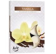 Cosy & Trendy Ct Set 6 Tea Light Vanilla 4hd3.9xh1.62cm (12er Set)