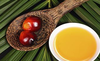 Palmöl - aus unserem Alltag nicht mehr wegzudenken