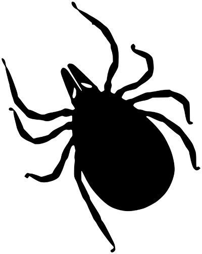 Gefahren durch Zeckenbisse vermeiden