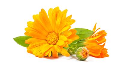 Ringelblumen-Blüten-Essen