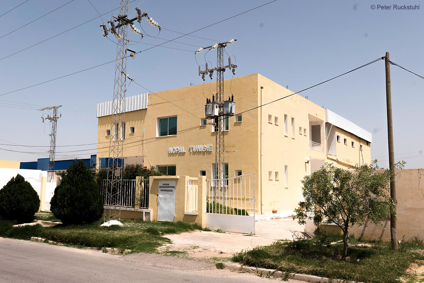 Nopal Tunisie