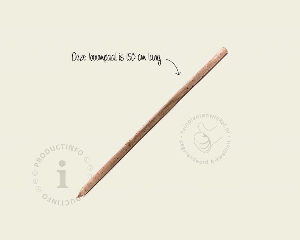 Boompaal - 150 cm