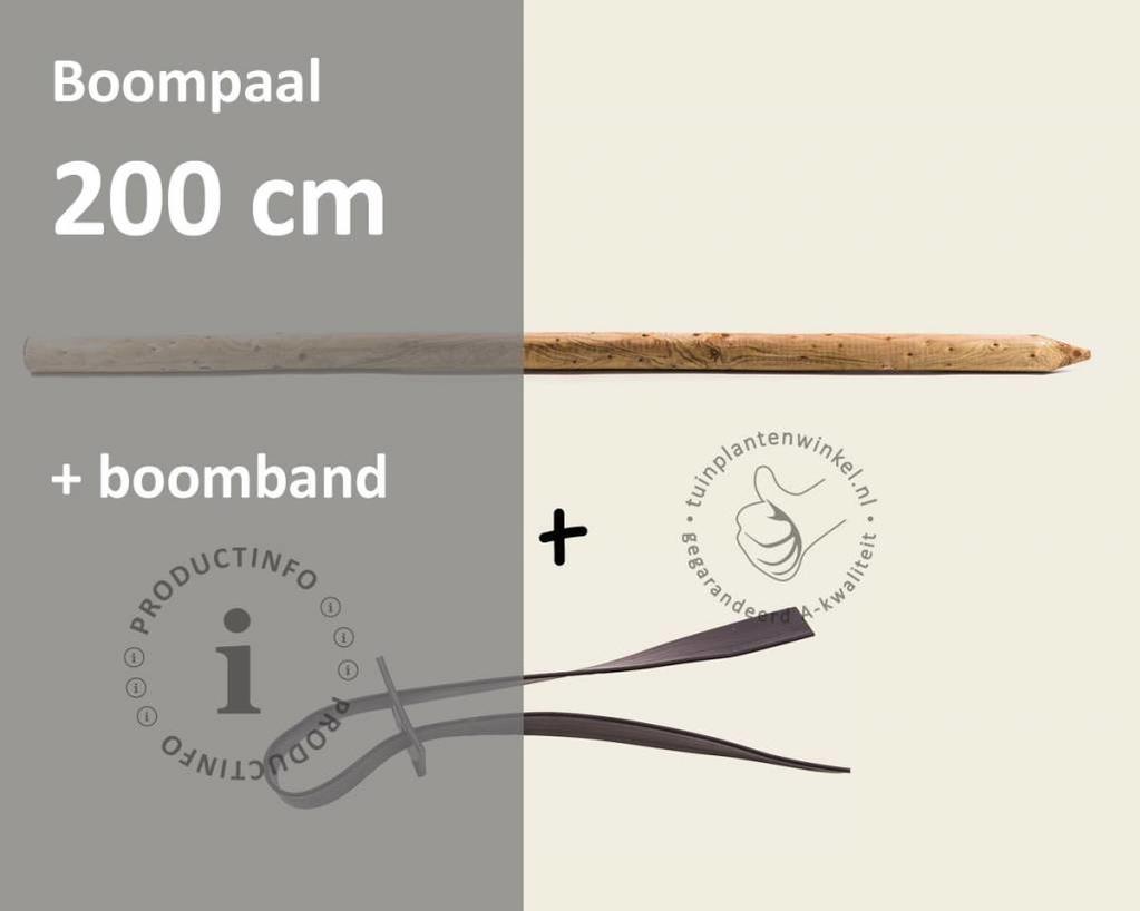 Toebehoren Leibomen los bestellen - Paal 200 cm + Band