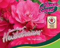 Rosa Flower Carpet 'Heidetraum'