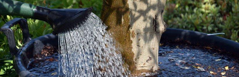Planten water geven in de tuin