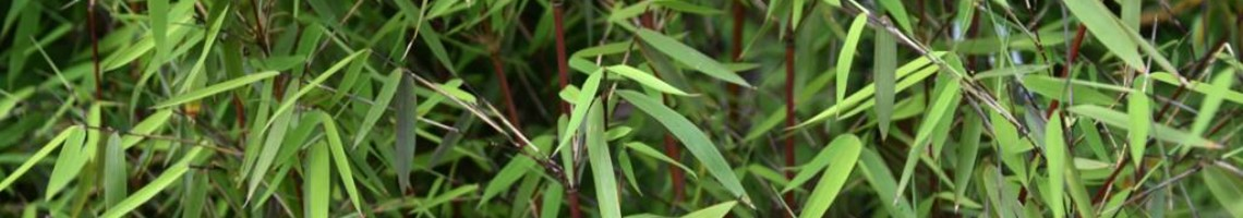 Alle bamboe