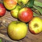 Alle fruitbomen