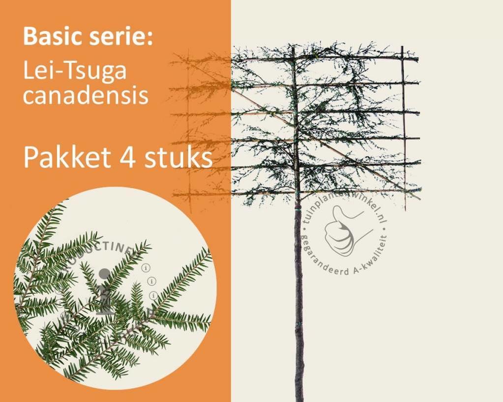 Lei-Tsuga - Basic - pakket 4 stuks + EXTRA'S!