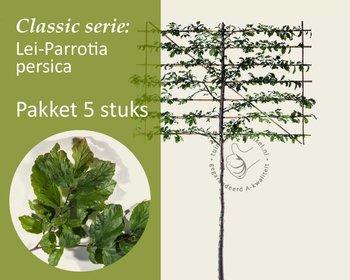 Lei-Parrotia - Classic - pakket 5 stuks + EXTRA'S!