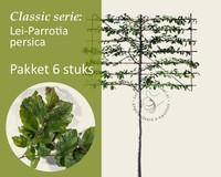 Lei-Parrotia - Classic - pakket 6 stuks + EXTRA'S!