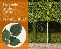 Lei-Linde - Basic - pakket 6 stuks + EXTRA'S!