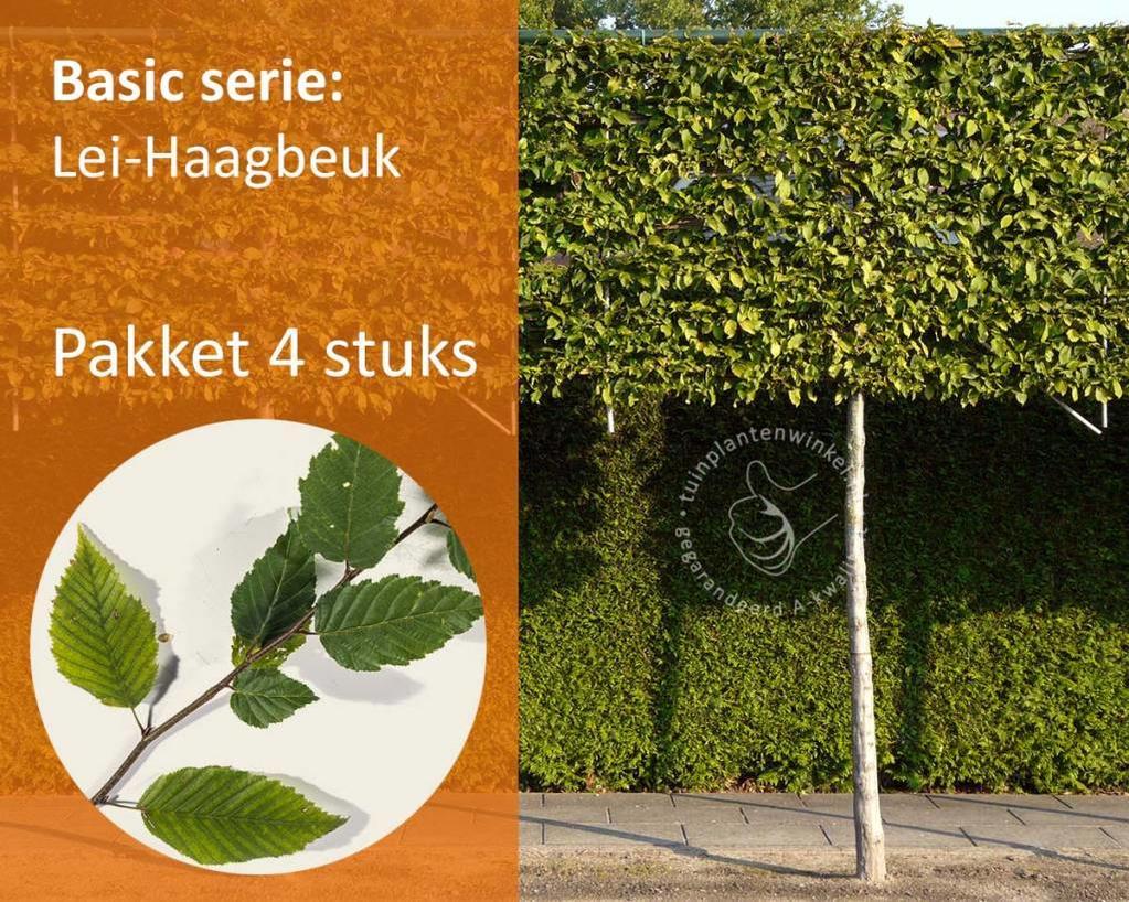 Lei-Haagbeuk - Basic - pakket 4 stuks + EXTRA'S!
