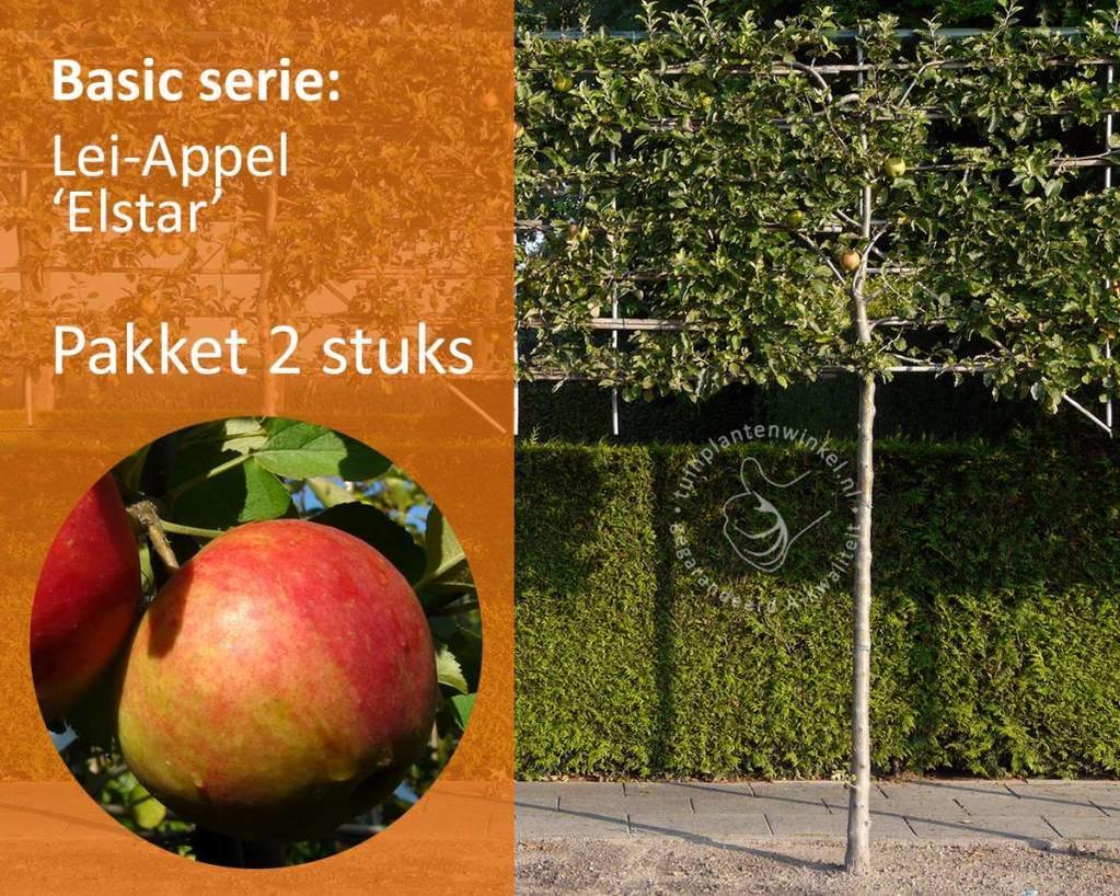 Lei-Appel 'Elstar' - Basic - pakket 2 stuks + EXTRA'S!