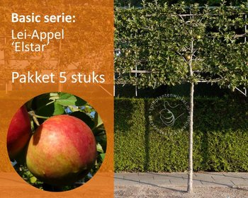 Lei-Appel 'Elstar' - Basic - pakket 5 stuks + EXTRA'S!