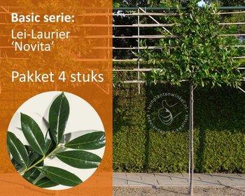 Lei-Laurier - Basic - pakket 4 stuks + EXTRA'S!