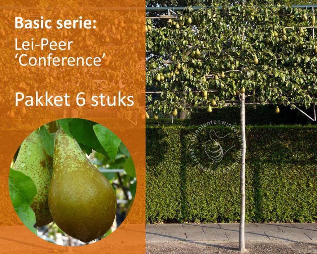 Lei-Peer 'Conference' - Basic - pakket 6 stuks + EXTRA'S!