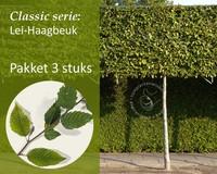 Lei-Haagbeuk - Classic - pakket 3 stuks + EXTRA'S!