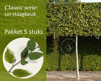 Lei-Haagbeuk - Classic - pakket 5 stuks + EXTRA'S!