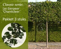 Lei-Sierpeer - Classic - pakket 3 stuks + EXTRA'S!