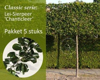 Lei-Sierpeer - Classic - pakket 5 stuks + EXTRA'S!