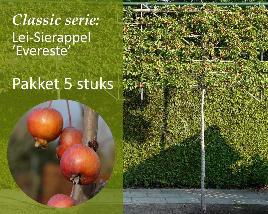 Lei-Sierappel 'Evereste' - Classic - pakket 5 stuks + EXTRA'S!