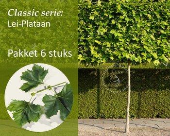 Lei-Plataan - Classic - pakket 6 stuks + EXTRA'S!