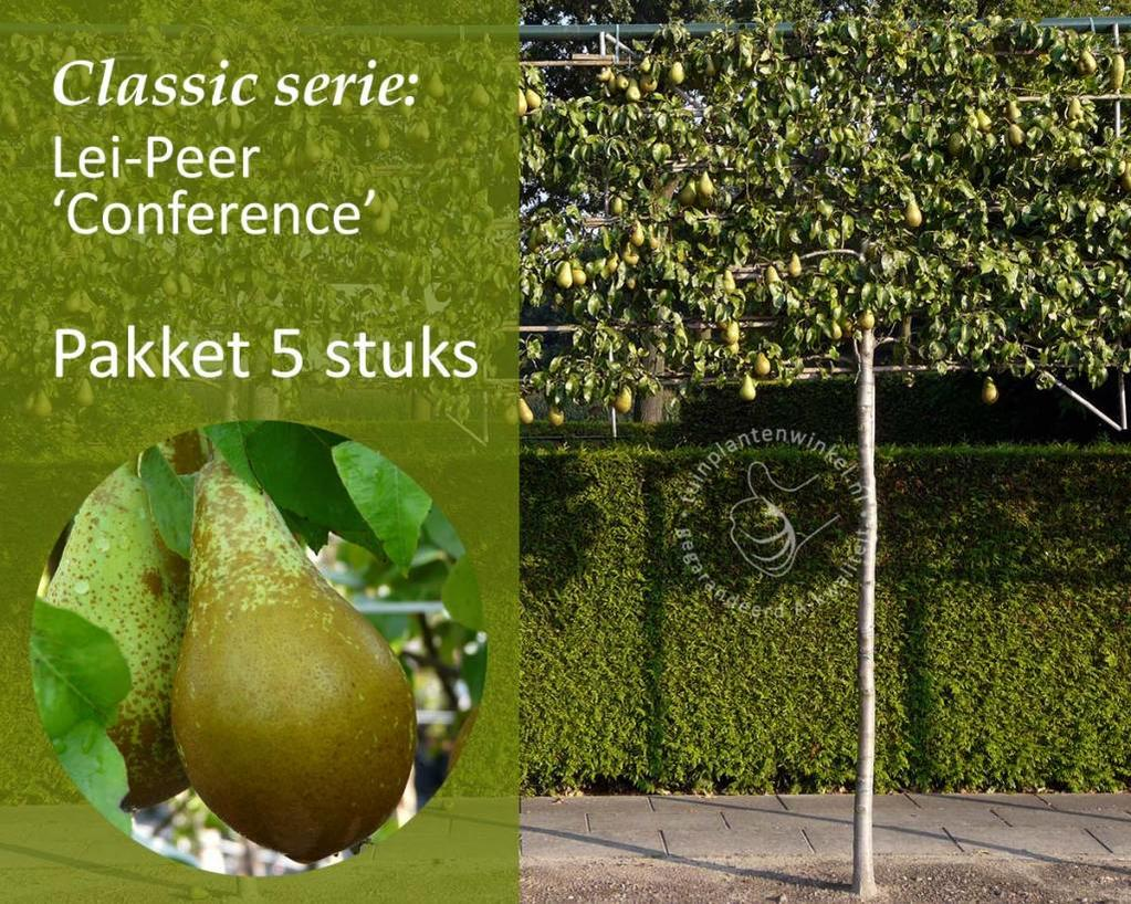 Lei-Peer 'Conference' - Classic - pakket 5 stuks + EXTRA'S!