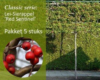 Lei-Sierappel 'Red Sentinel' - Classic - totaalpakket 5 stuks