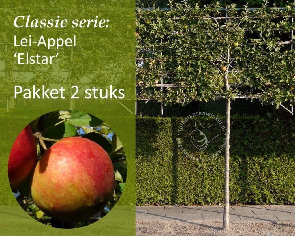 Lei-Appel 'Elstar' - Classic - pakket 2 stuks + EXTRA'S!