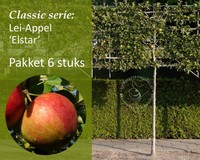 Lei-Appel 'Elstar' - Classic - pakket 6 stuks + EXTRA'S!