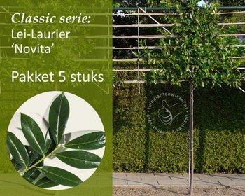 Lei-Laurier 'Novita' - Classic - pakket 5 stuks + EXTRA'S!