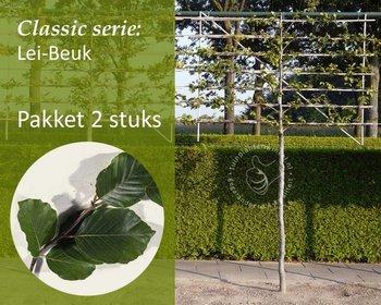 Lei-Groene Beuk - Classic - pakket 2 stuks + EXTRA'S!