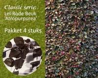 Lei-Rode Beuk - Classic - pakket 4 stuks + EXTRA'S!