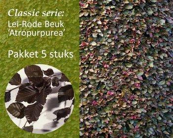 Lei-Rode Beuk - Classic - pakket 5 stuks + EXTRA'S!