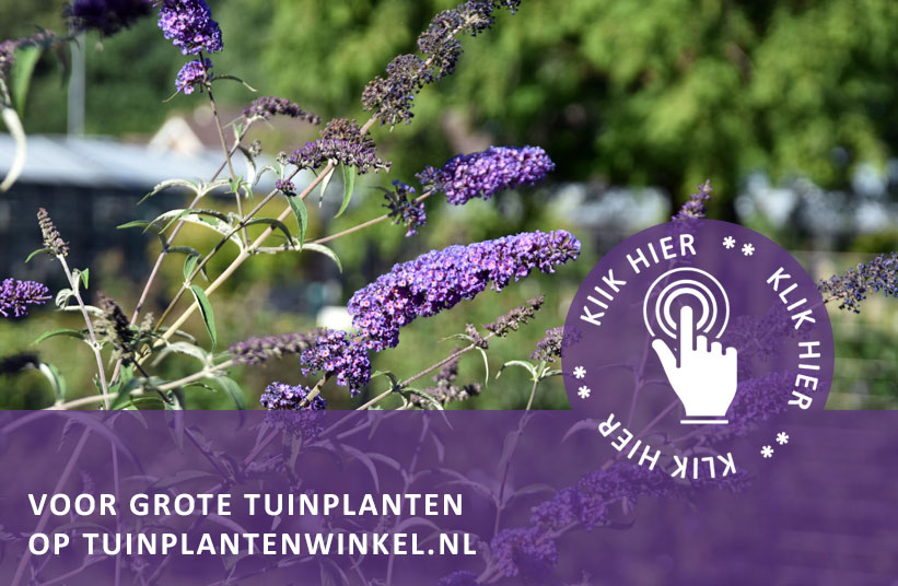 Grote tuinplanten xl tuinplantenwinkel tuinplantenwinkel