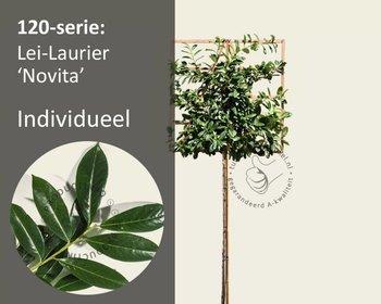 Lei-Laurier 'Novita' - 120 - Individueel geen extra's