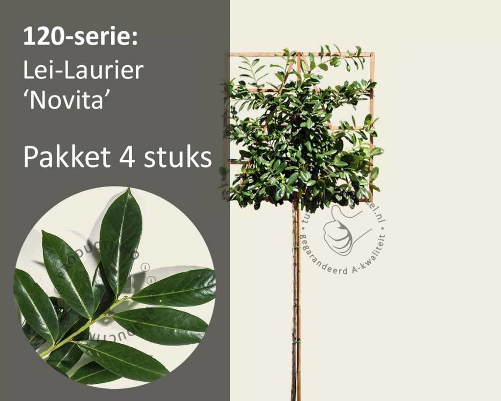 Lei-Laurier - 120 - pakket 4 stuks + EXTRA'S!