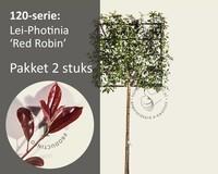 Lei-Photinia - Hoogstam - pakket 2 stuks + EXTRAS!