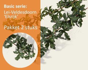 Lei-Veldesdoorn - Basic - pakket 2 stuks + EXTRA'S!