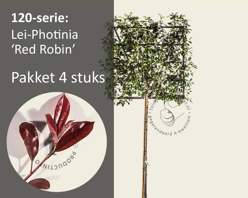 Lei-Photinia - Hoogstam - pakket 4 stuks + EXTRAS!