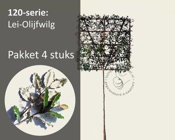 Lei-Olijfwilg - Hoogstam - pakket 4 stuks + EXTRA'S!