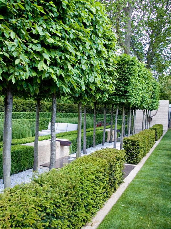 Ook in moderne tuinen komen leibomen goed tot zijn recht